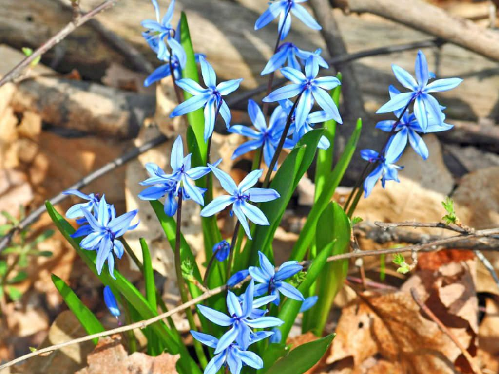 most beautiful blue flower names